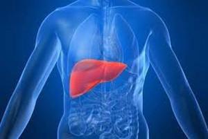 Artificial-Human-Liver